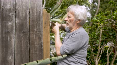 trabalhador manual : Active healthy senior man removing a nail from a broken fence with a lock wrench while repairing his home outside during the day