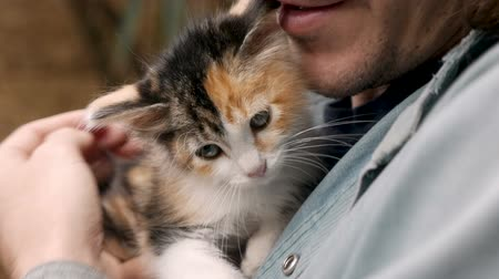 companionship : Close up of a young calico kitten being held by a hipster millennial attractive man in slow motion Stock Footage