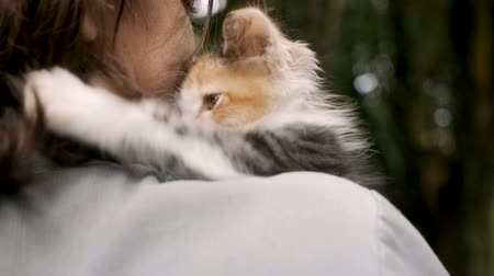 companionship : Tiny adorable female kitten playing with a mans hair while resting on his shoulder in slow motion Stock Footage