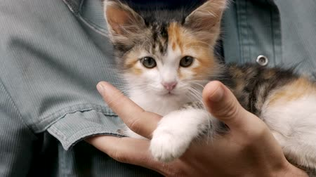 companionship : An adorable cute kitten looking at the camera in her owners hands in slow motion