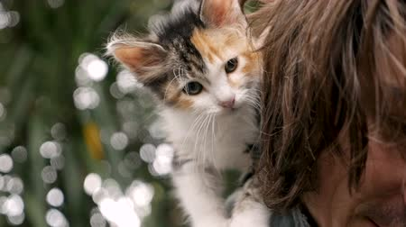 lét : Cute calico kitten standing on his young male owners back in slow motion
