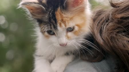 łaskotanie : Close up of an adorable small young kitten on her owners shoulder outside in slow motion