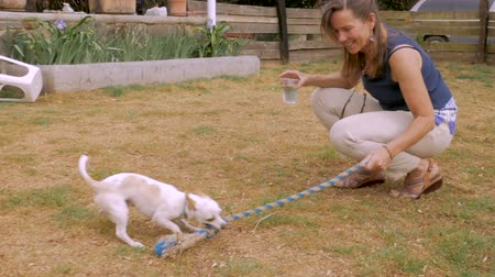 владелец : Attractive woman playing tug of war with a rope toy and her chihuahua male dog outside in slow motion