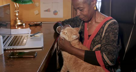 companionship : African American woman working at home with a laptop computer and cell phone technology petting her affectionate orange cat