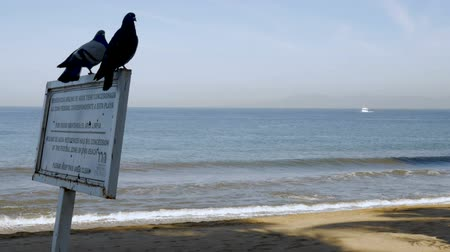 Észak amerika : Two pigeons sitting on a sign next to the ocean with a boat approaching in slow motion