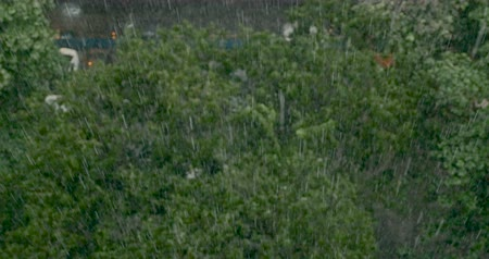 metropolitan area : Heavy rain falling on top of trees shot from above in a city Stock Footage
