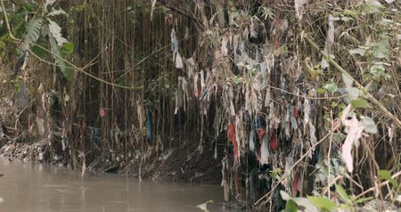 irresponsible : Large amount of plastic trash attached to plants next to a river from plastic bags flowing downstream