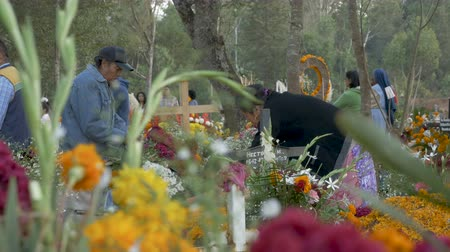 muertos : TZURUMUTARO, MEXICO - NOVEMBER 1, 2016 - Mexican families prepare grave sites with flower during the celebration of Day of the Dead honoring and remembering those who have passed Stock Footage