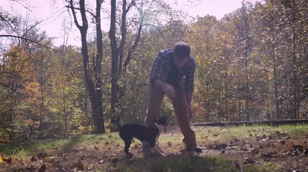 glare : Handsome happy smiling man playing tug of war with his pet Boston Terrier dog outside in a park with leaves on the grass in slow motion with lens flair and sun glare Stock Footage
