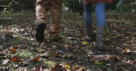 buty : Camera follows a man and woman walking or hiking through fallen leaves with their small dog off leash in the woods - stabilized shot
