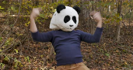 間抜けな : Man wearing a panda mask celebrating a victory and dancing while expressing victory and winning