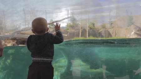 kafes : a baby boy watching a polar bear swim at the hogle zoo