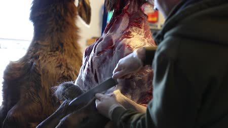 descamação : a man skins an elk to butcher the animal for its meat Stock Footage