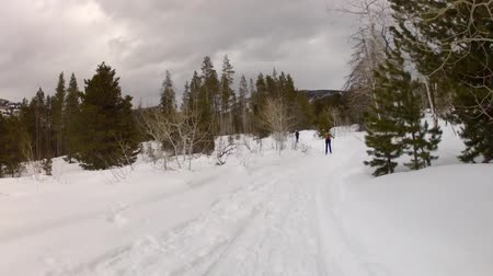 buty : women cross country skiing in the forrest after a snowfall