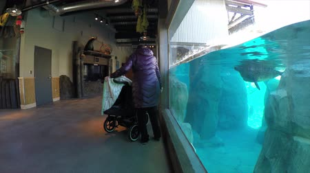 primaz : a mom and toddler with a stroller and seals at the zoo Vídeos