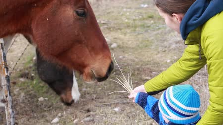 farpado : a mother and her boy toddler feeding the horses Stock Footage