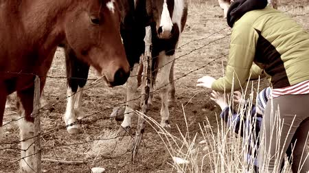 farpado : a mother and toddler feeding horses