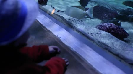 hvězdice : a toddler looking at fish at the aquarium