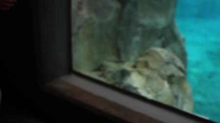 gaiola : a baby boy sitting in his stroller watching the seals in the aquarium at the zoo Stock Footage