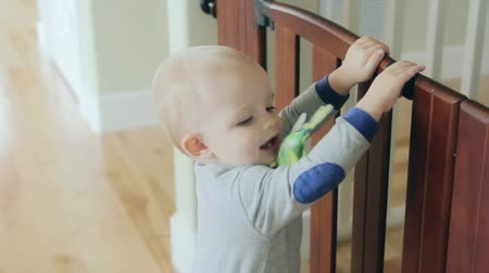 papuga : a little toddler boy walking through his house with a parakeet bird Wideo