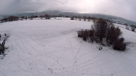 cavalos : 4K aerial shot over snowy field with horses
