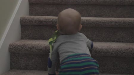 papuga : a little boy trying to go up the stairs with a parakeet on him