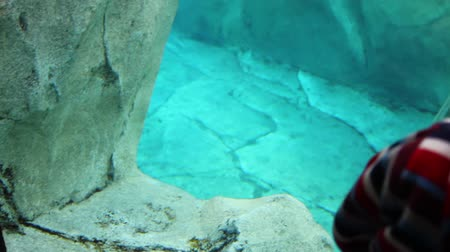 kafes : children watching a seal in aquarium at the zoo Stok Video