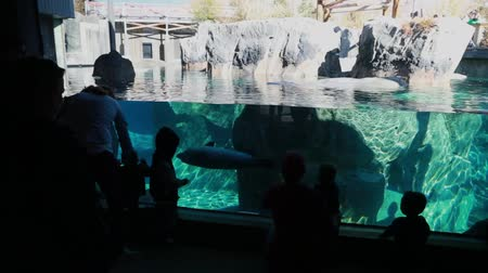 captivity : children watching seal in zoo aquarium Stock Footage
