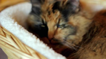 ronronar : Dolly in on cat sleeping