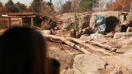 captivity : families at the zoo looking for polar bears