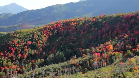 árvores : Colorful Fall Mountain Range Panning Shot
