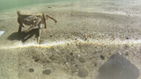 inferior : Crab Traveling Across Sand Underwater Vídeos