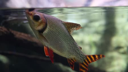 ploutve : fish eating food in an aquarium Dostupné videozáznamy