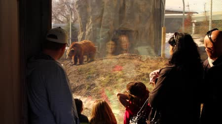 kafes : people watching a grissly bear at the zoo