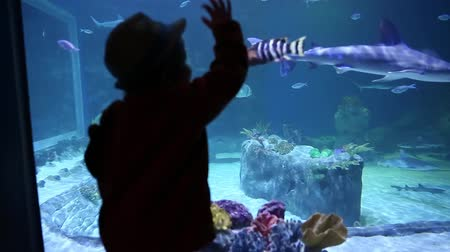 hvězdice : little boy looking at fish at the aquarium