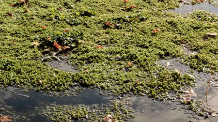 komar : Moss on Pond Dolly Shot