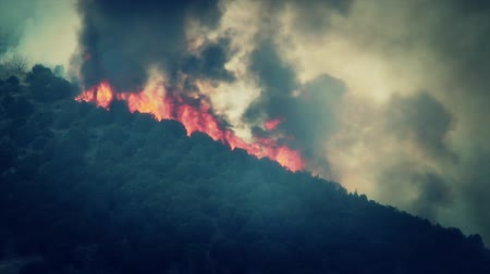 jungle : Huge Flames From Forest Fire