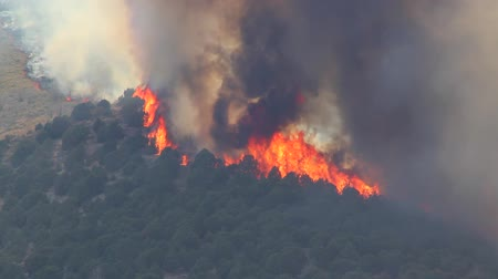 hamu : Huge Forest Fire Burning Trees on Mountain