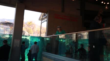 captivity : Inside zoo aquarium