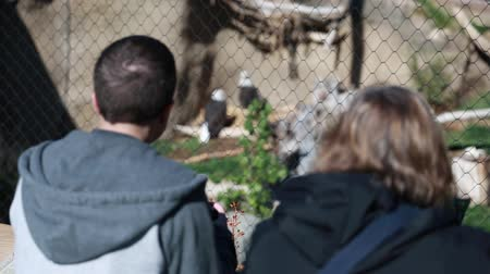 captivity : tourists looking at bald eagles in the local zoo