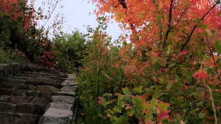 schody : Rock Pathway Through Autumn Leaves Dolly Shot Wideo