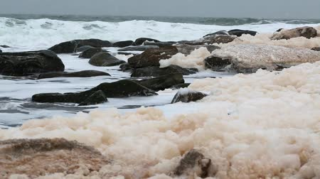 cape breton : sea foam on an amazing winter shore