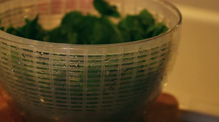 espinafre : spinach in the salad spinner
