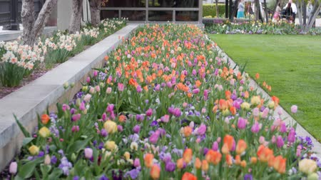 springtime : Springtime flower gardens in april tilt shot Stock Footage