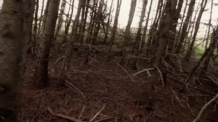 árvores : Steadicam walk through scary forest