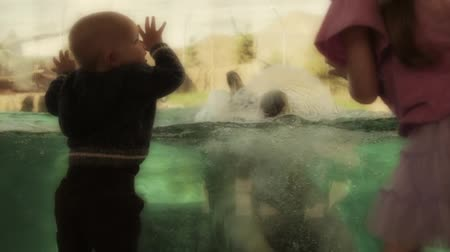divu : toddler boy watching polar bear swimming slow motion