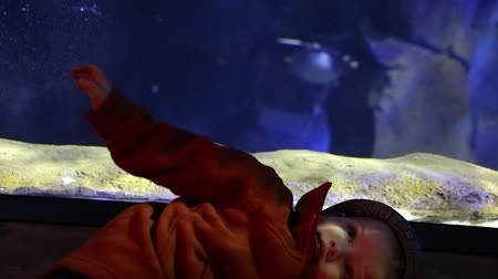 hvězdice : toddler looking at the penguins in a large aquarium Dostupné videozáznamy