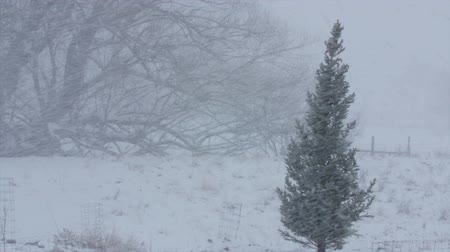 kar fırtınası : Trees blow in a major winter blizzard Stok Video