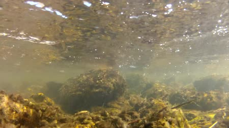 rzeka : underwater river shot