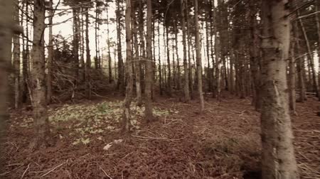 árvores : Walking through dead trees with steadycam